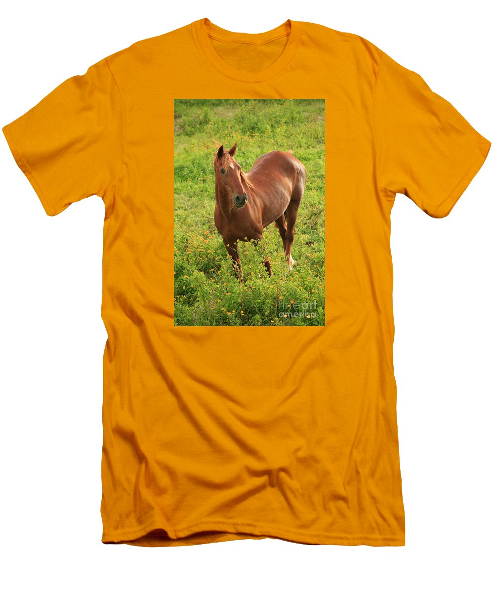 Animals Men's T-Shirt (Athletic Fit) featuring the photograph Horse In A Field With Flowers by Gaspar Avila