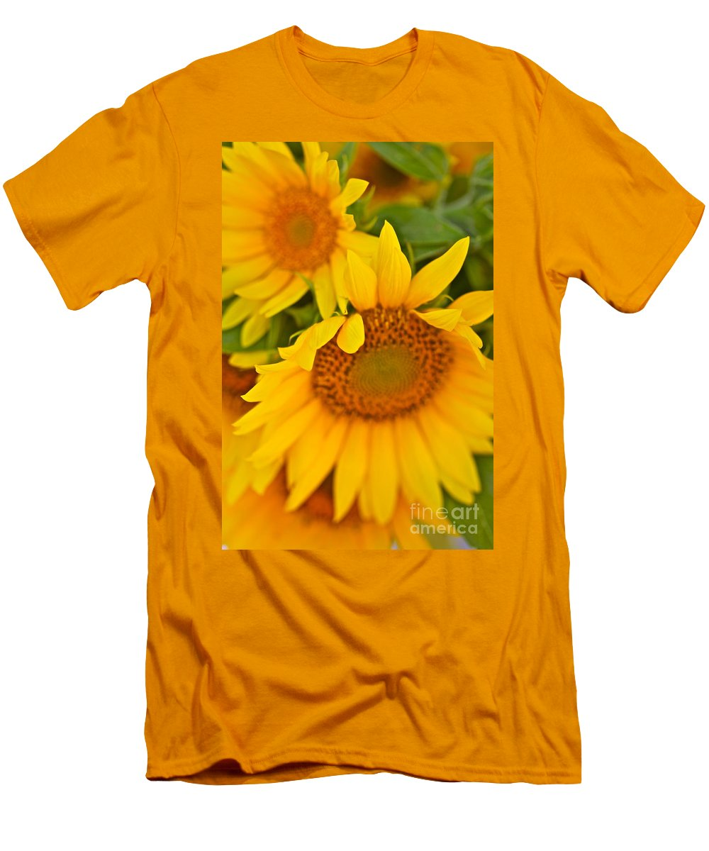 Yellow Men's T-Shirt (Athletic Fit) featuring the photograph Three Sunflowers by Nadine Rippelmeyer