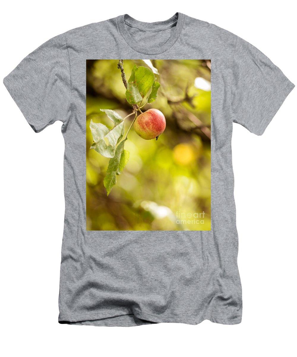 Park Men's T-Shirt (Athletic Fit) featuring the photograph Autumn Apple by Matt Malloy