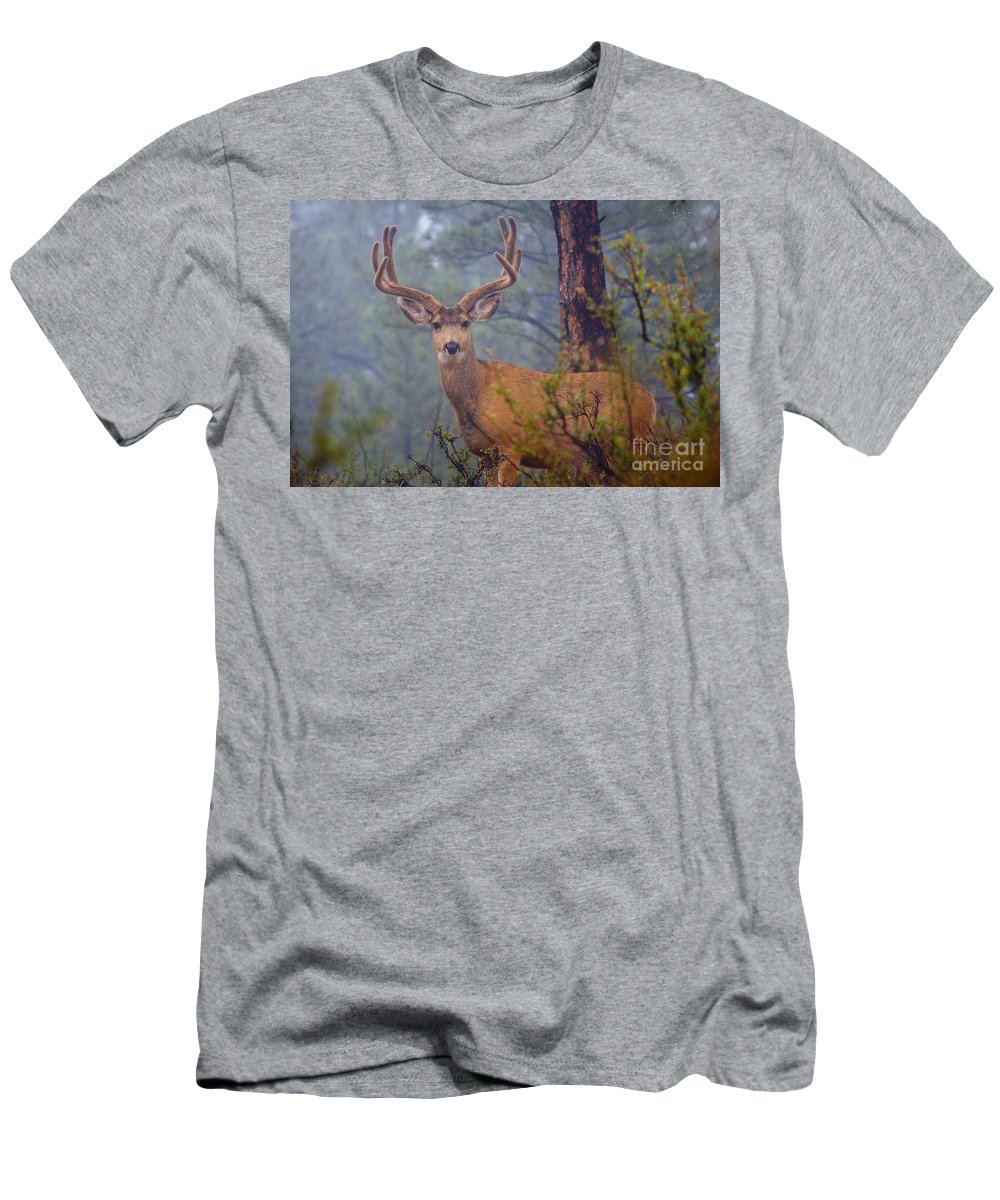 Colorado Men's T-Shirt (Athletic Fit) featuring the photograph Buck Deer In A Mystical Foggy Forest Scene by Steve Krull