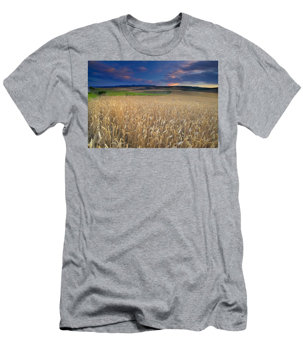 Plants Men's T-Shirt (Athletic Fit) featuring the photograph Cereal Fields At Sunset by Guido Montanes Castillo