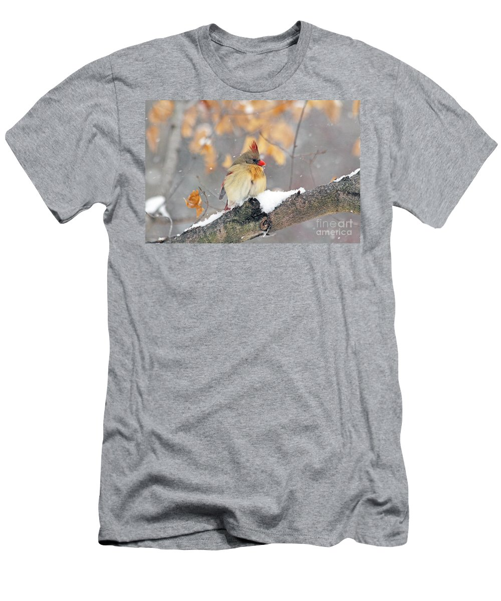 Cardinal Men's T-Shirt (Athletic Fit) featuring the photograph Female Cardinal In Snow by Jack Schultz
