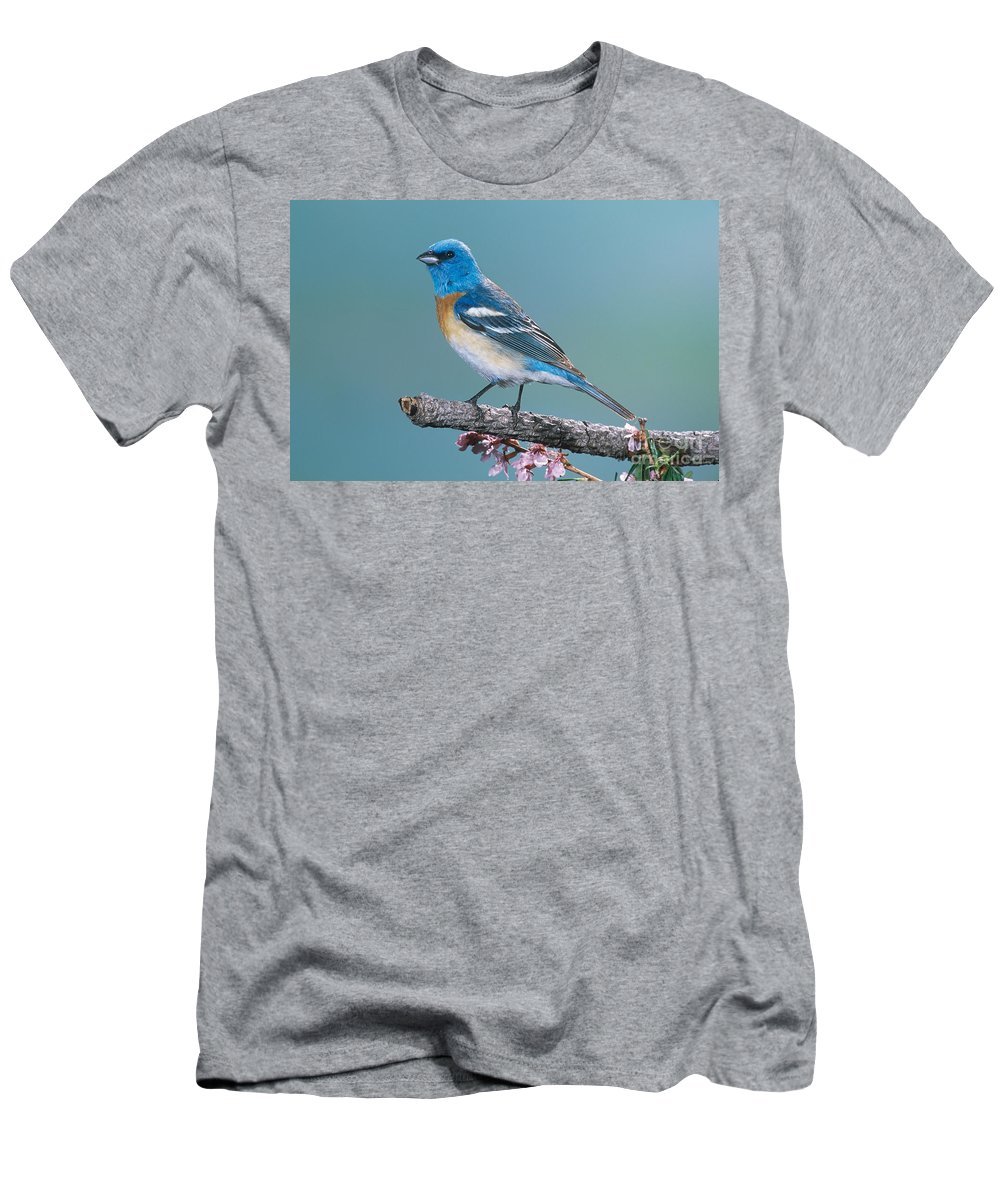 Animal Men's T-Shirt (Athletic Fit) featuring the photograph Lazuli Bunting by Anthony Mercieca