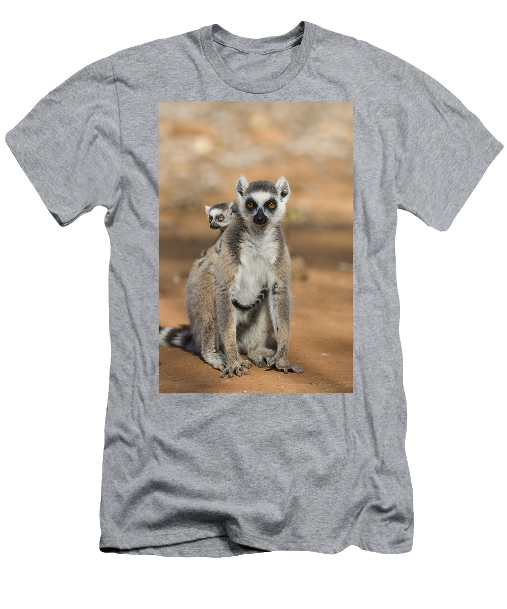 Feb0514 Men's T-Shirt (Athletic Fit) featuring the photograph Ring-tailed Lemur And Baby Madagascar by Suzi Eszterhas