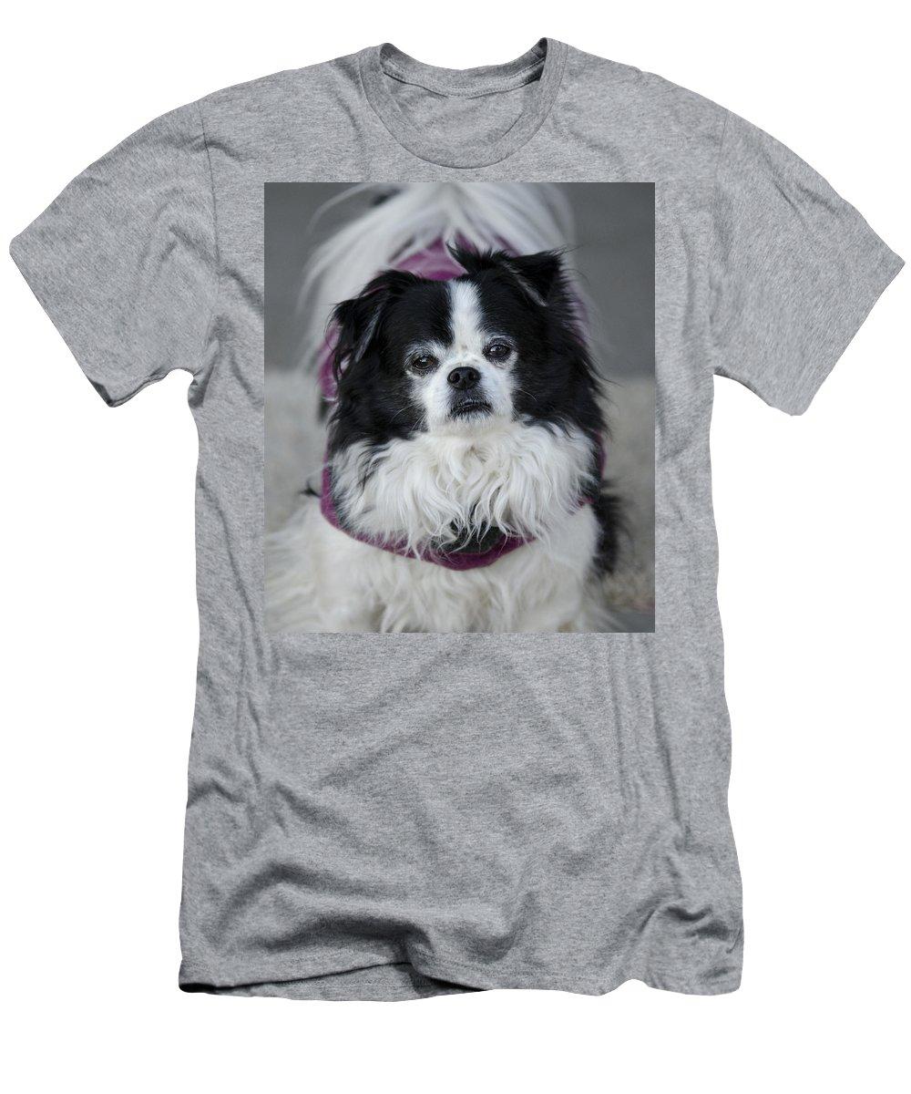 Japanese Chin Men's T-Shirt (Athletic Fit) featuring the photograph Romeo by Saija Lehtonen