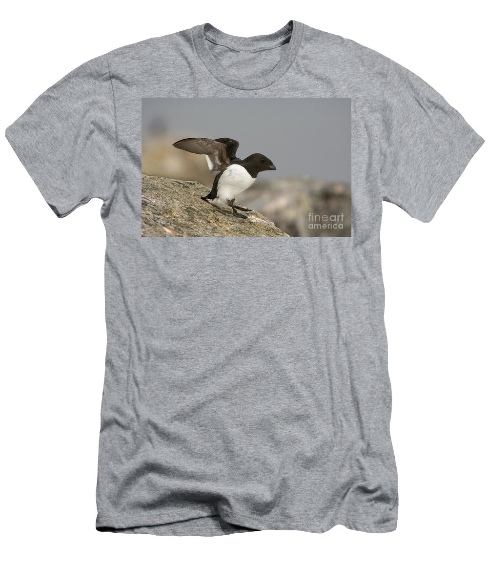 Dovekie Men's T-Shirt (Athletic Fit) featuring the photograph Sitting Dovekie by John Shaw