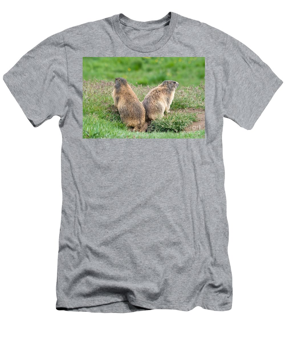 Marmot Men's T-Shirt (Athletic Fit) featuring the photograph Two Marmots by Antonio Scarpi