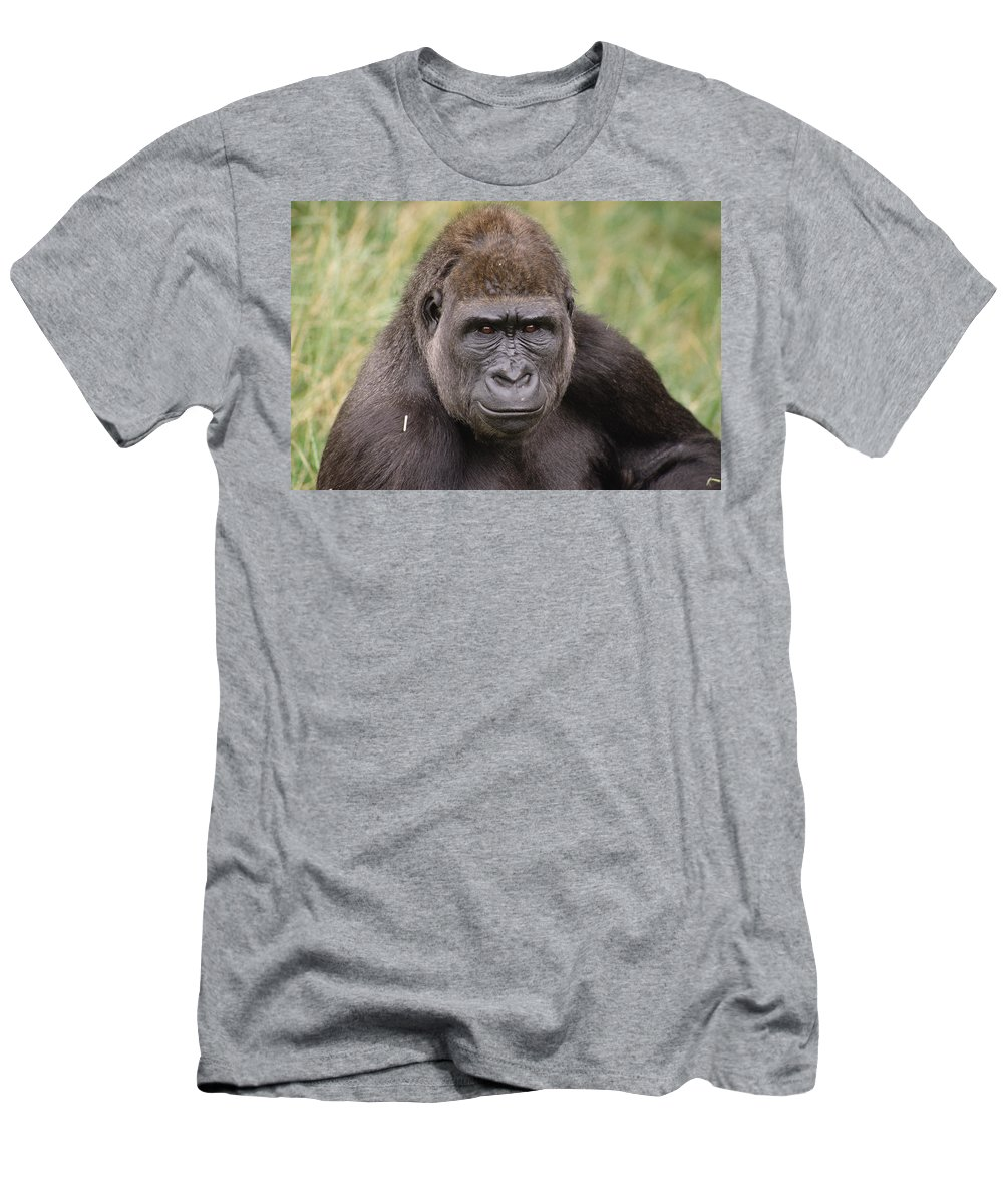 Feb0514 Men's T-Shirt (Athletic Fit) featuring the photograph Western Lowland Gorilla Young Male by Gerry Ellis