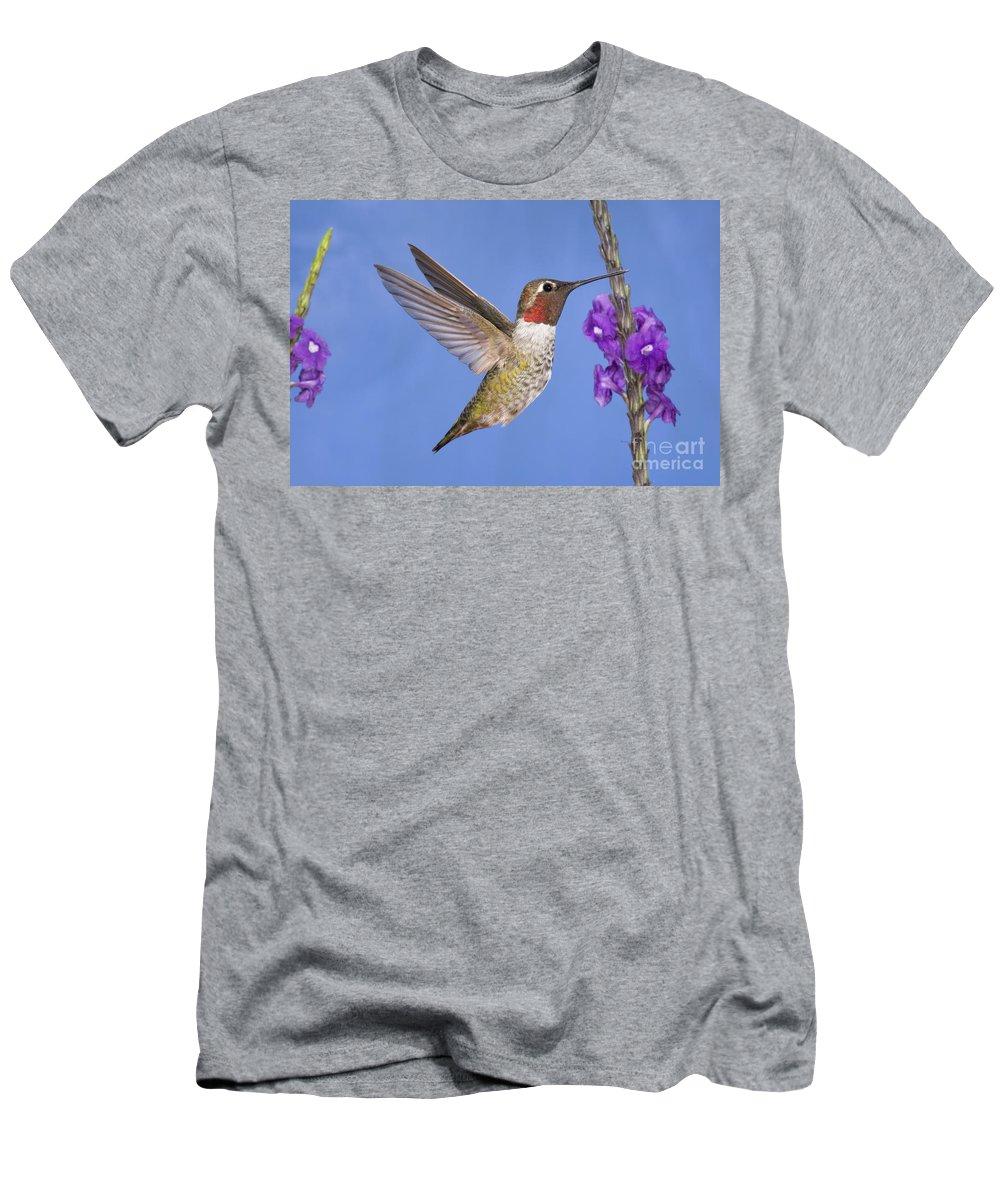 Anna's Hummingbird Men's T-Shirt (Athletic Fit) featuring the photograph Annas Hummingbird by Anthony Mercieca