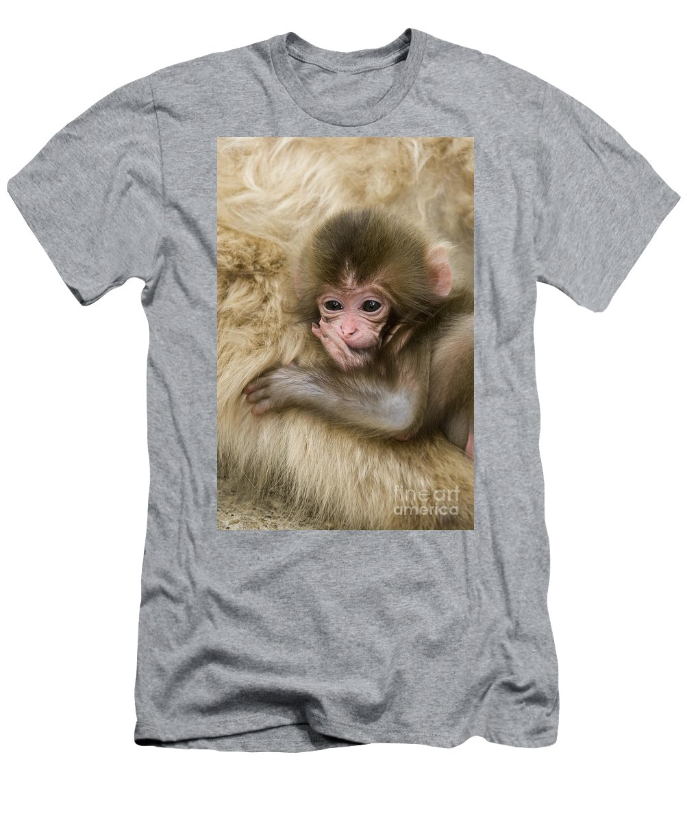 Asia Men's T-Shirt (Athletic Fit) featuring the photograph Baby Snow Monkey, Japan by John Shaw