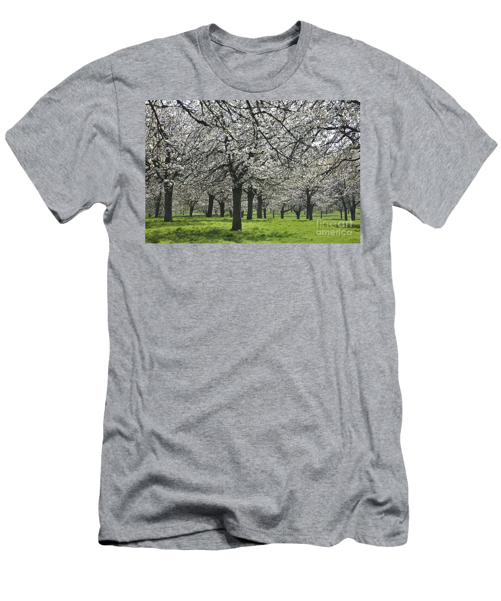 Cherry Men's T-Shirt (Athletic Fit) featuring the photograph 110111p265 by Arterra Picture Library