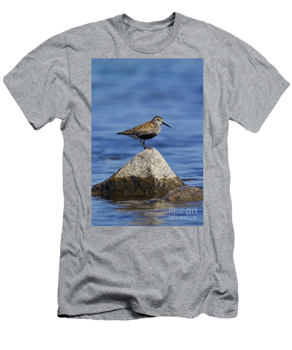 Calidris Alpina Men's T-Shirt (Athletic Fit) featuring the photograph 121213p019 by Arterra Picture Library