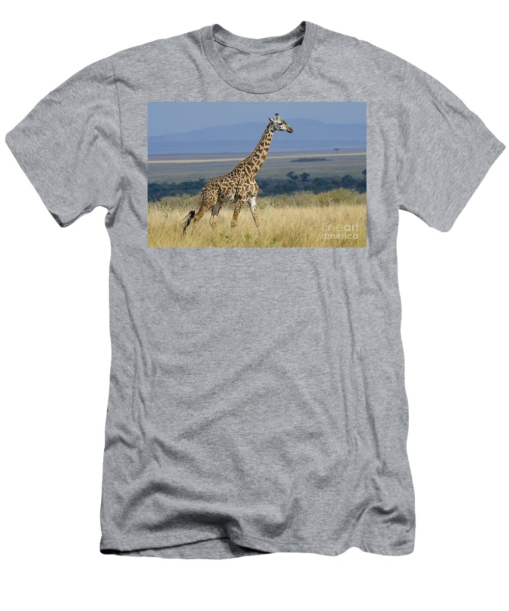 Africa Men's T-Shirt (Athletic Fit) featuring the photograph Common Giraffe by John Shaw