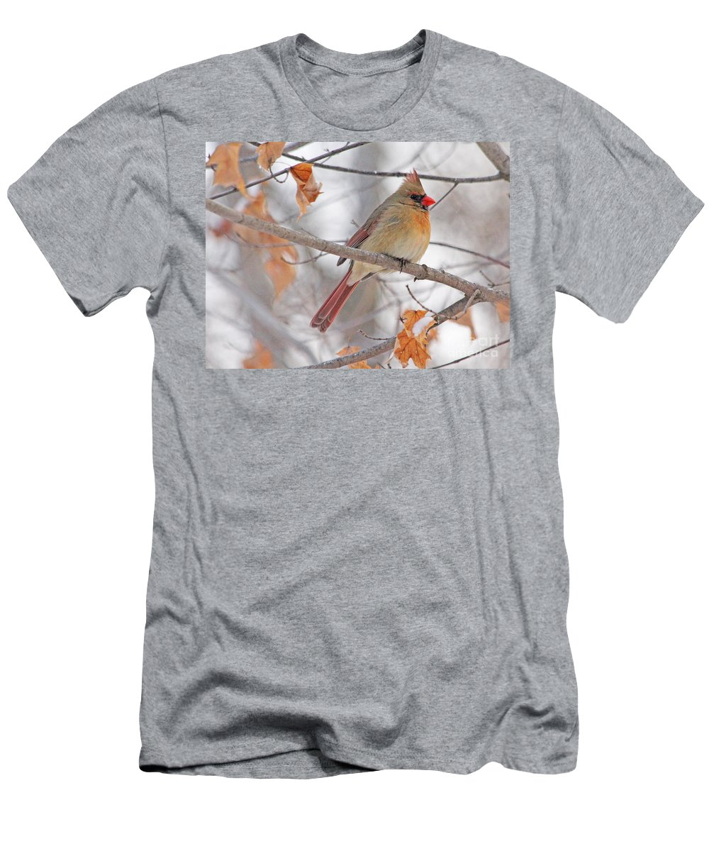 Female Cardinal Men's T-Shirt (Athletic Fit) featuring the photograph Female Cardinal In Winter by Jack Schultz