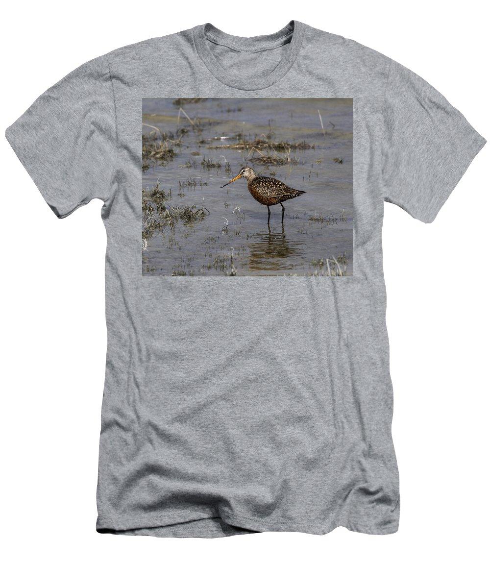 Doug Lloyd Men's T-Shirt (Athletic Fit) featuring the photograph Hudsonian Godwit by Doug Lloyd
