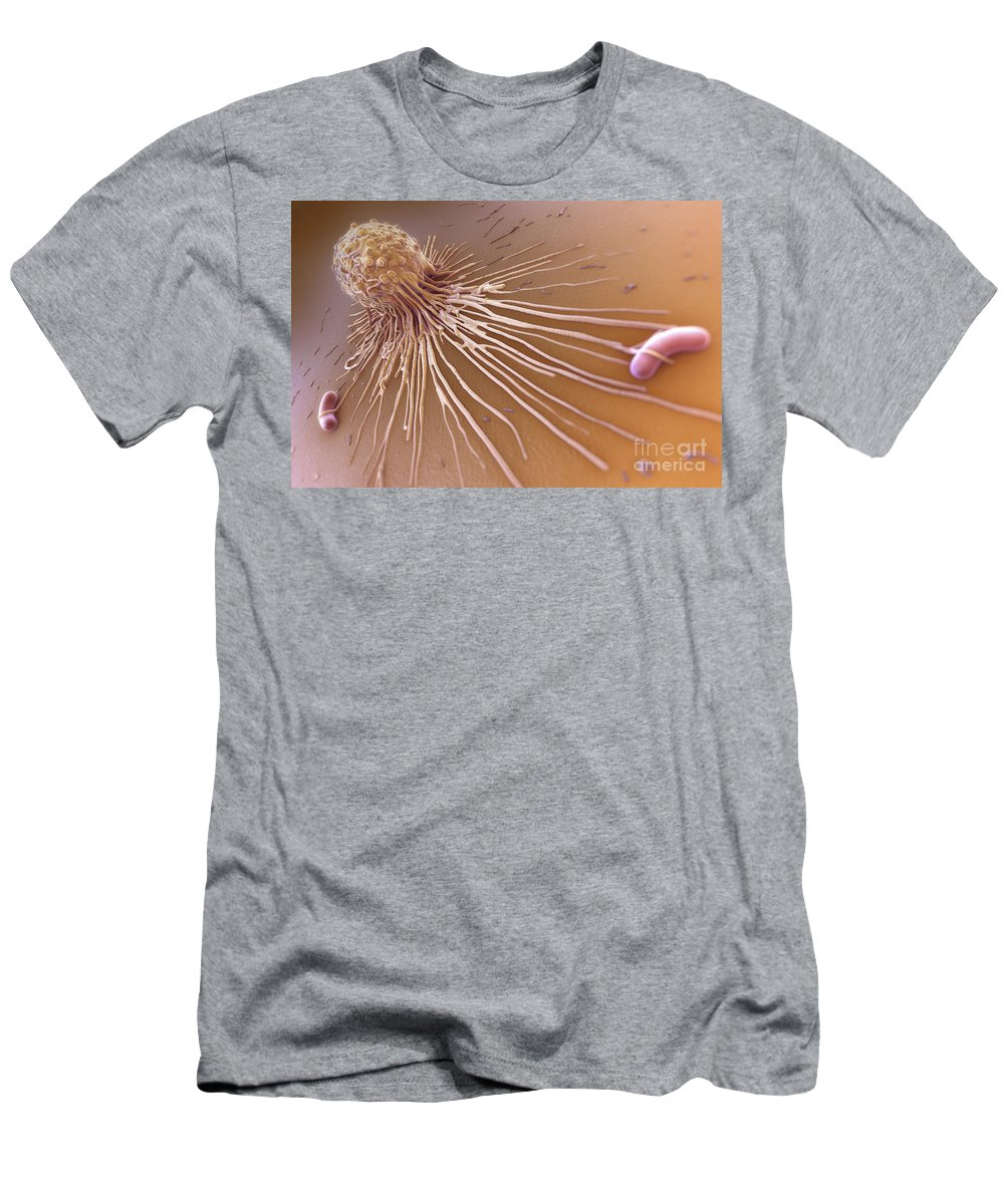 3d Visualisation Men's T-Shirt (Athletic Fit) featuring the photograph Macrophage Fighting Bacteria by Science Picture Co