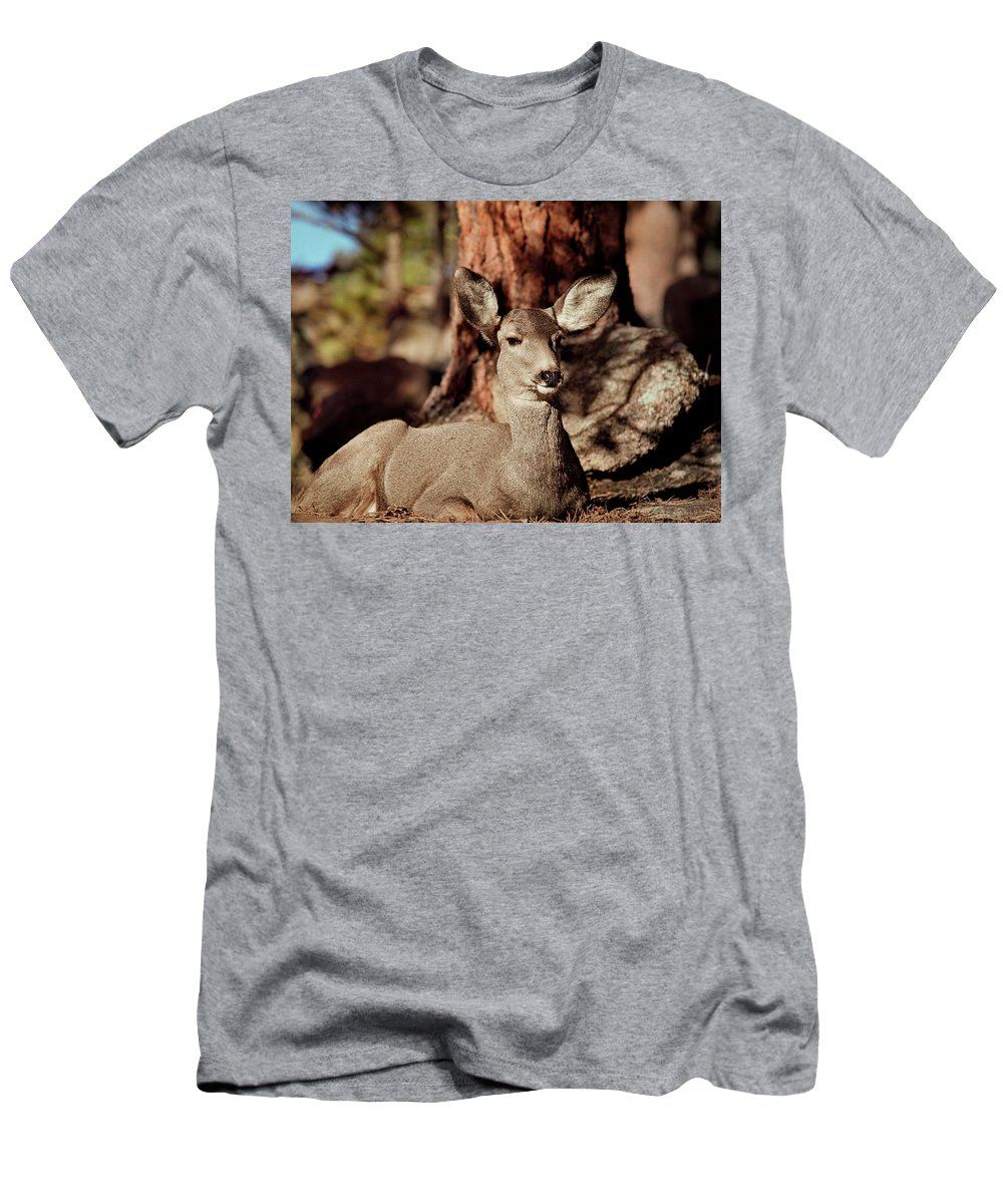 Colorado Men's T-Shirt (Athletic Fit) featuring the photograph Mule Deer Doe by Eric Glaser