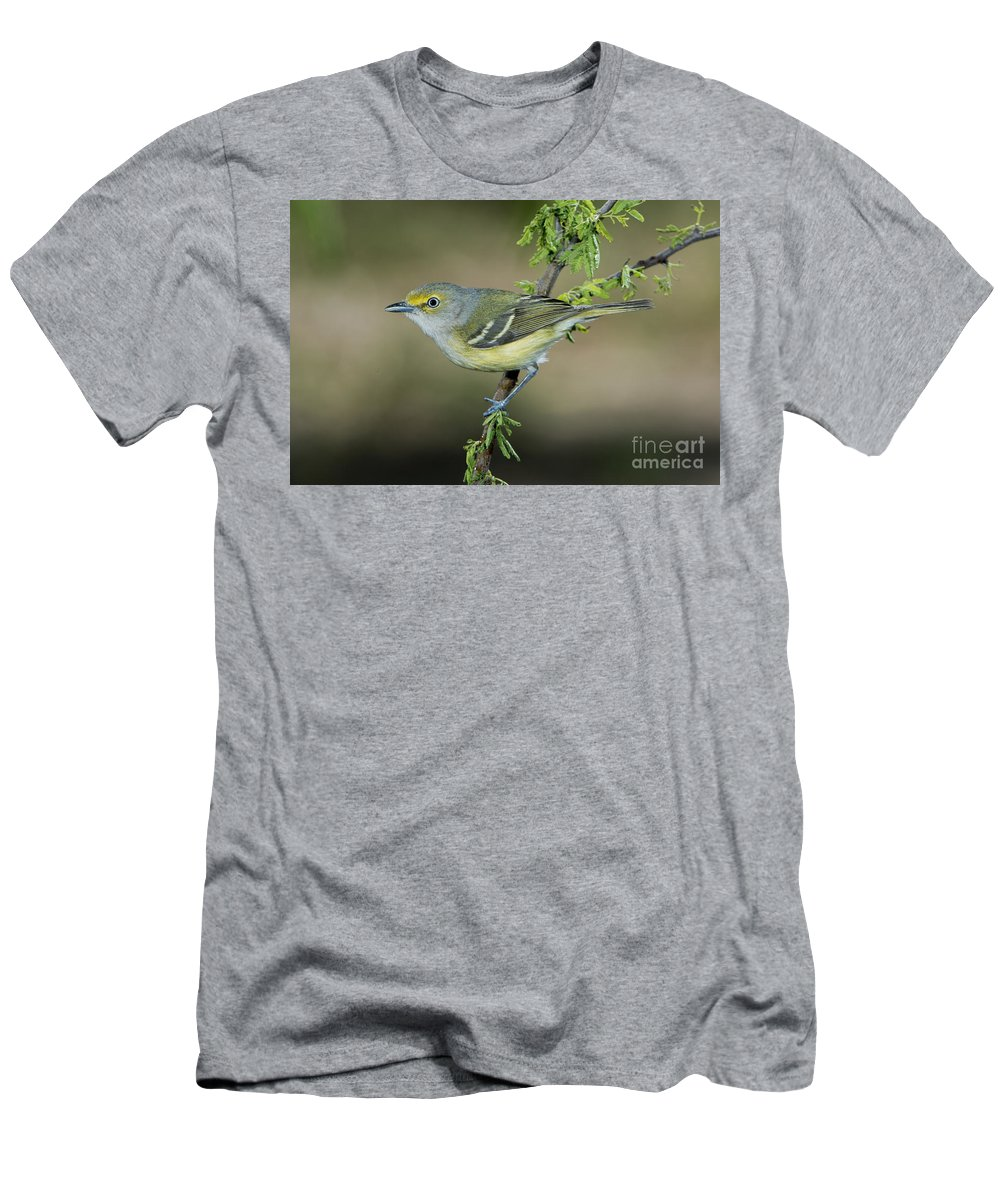 White-eyed Vireo Men's T-Shirt (Athletic Fit) featuring the photograph White-eyed Vireo by Anthony Mercieca