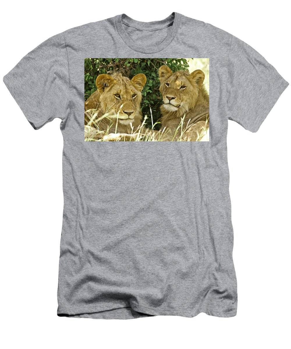 Lion T-Shirt featuring the photograph Young Brothers by Michele Burgess