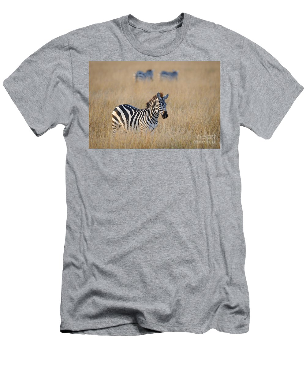 Africa Men's T-Shirt (Athletic Fit) featuring the photograph Zebra by John Shaw