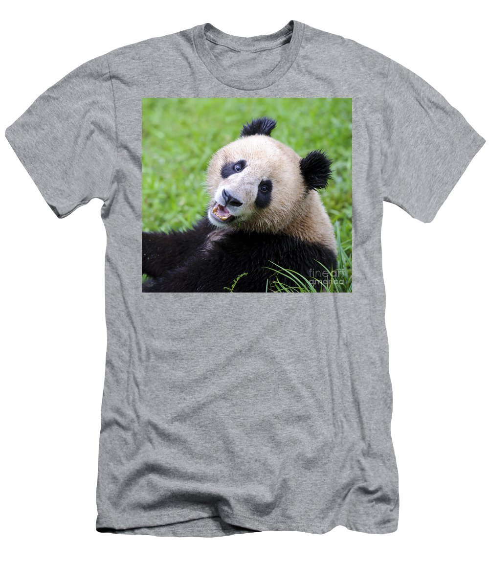 Ailuropoda Melanoleuca Men's T-Shirt (Athletic Fit) featuring the photograph Giant Panda by John Shaw