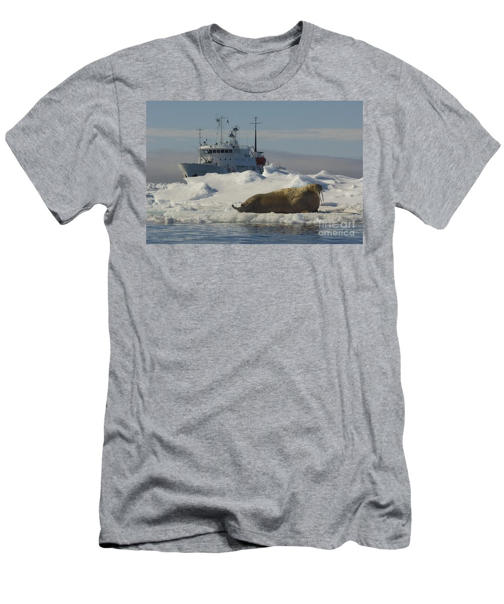 Walrus Men's T-Shirt (Athletic Fit) featuring the photograph Walrus Resting On Ice Floe by John Shaw