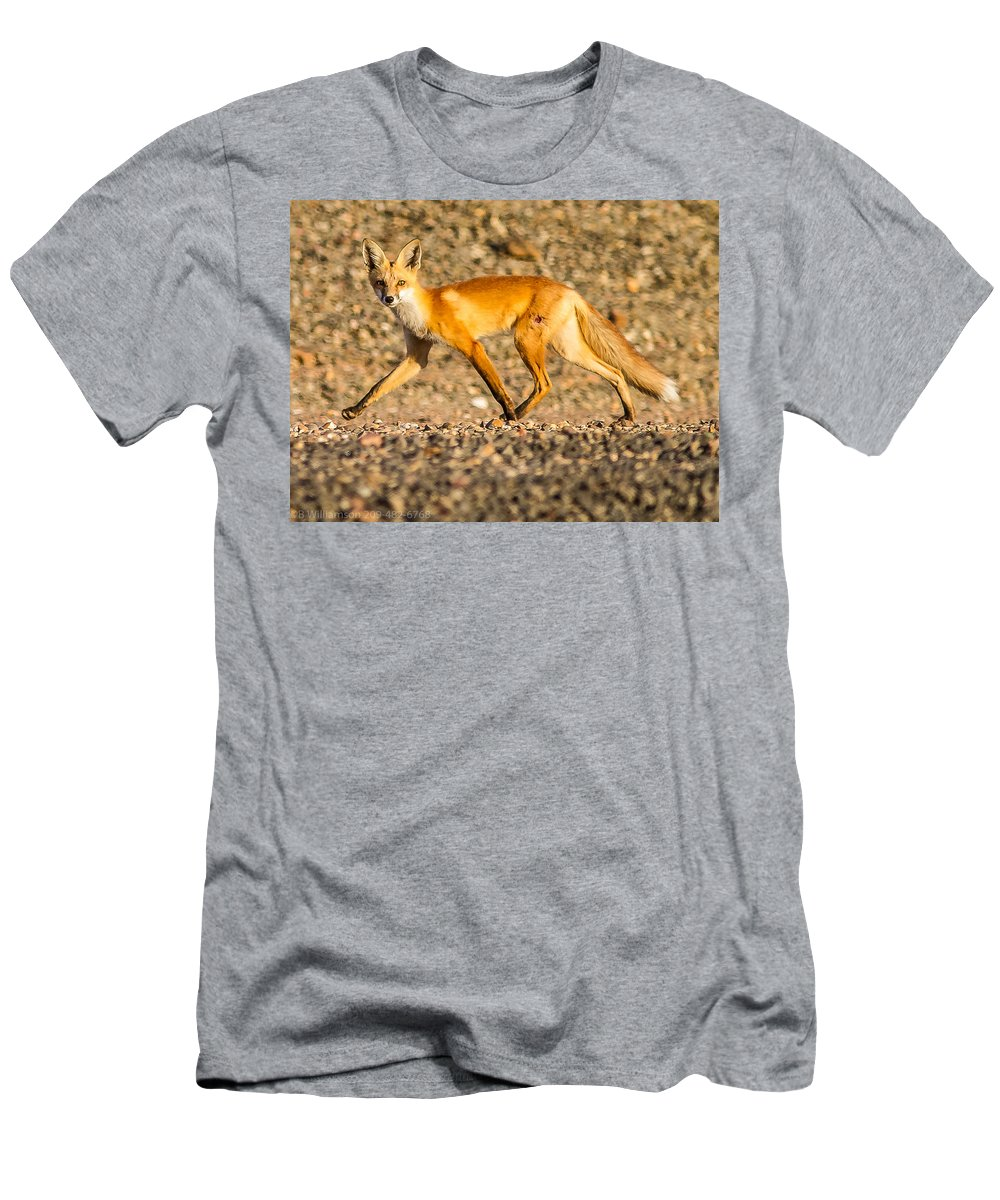Red Fox Men's T-Shirt (Athletic Fit) featuring the photograph A Red Fox by Brian Williamson