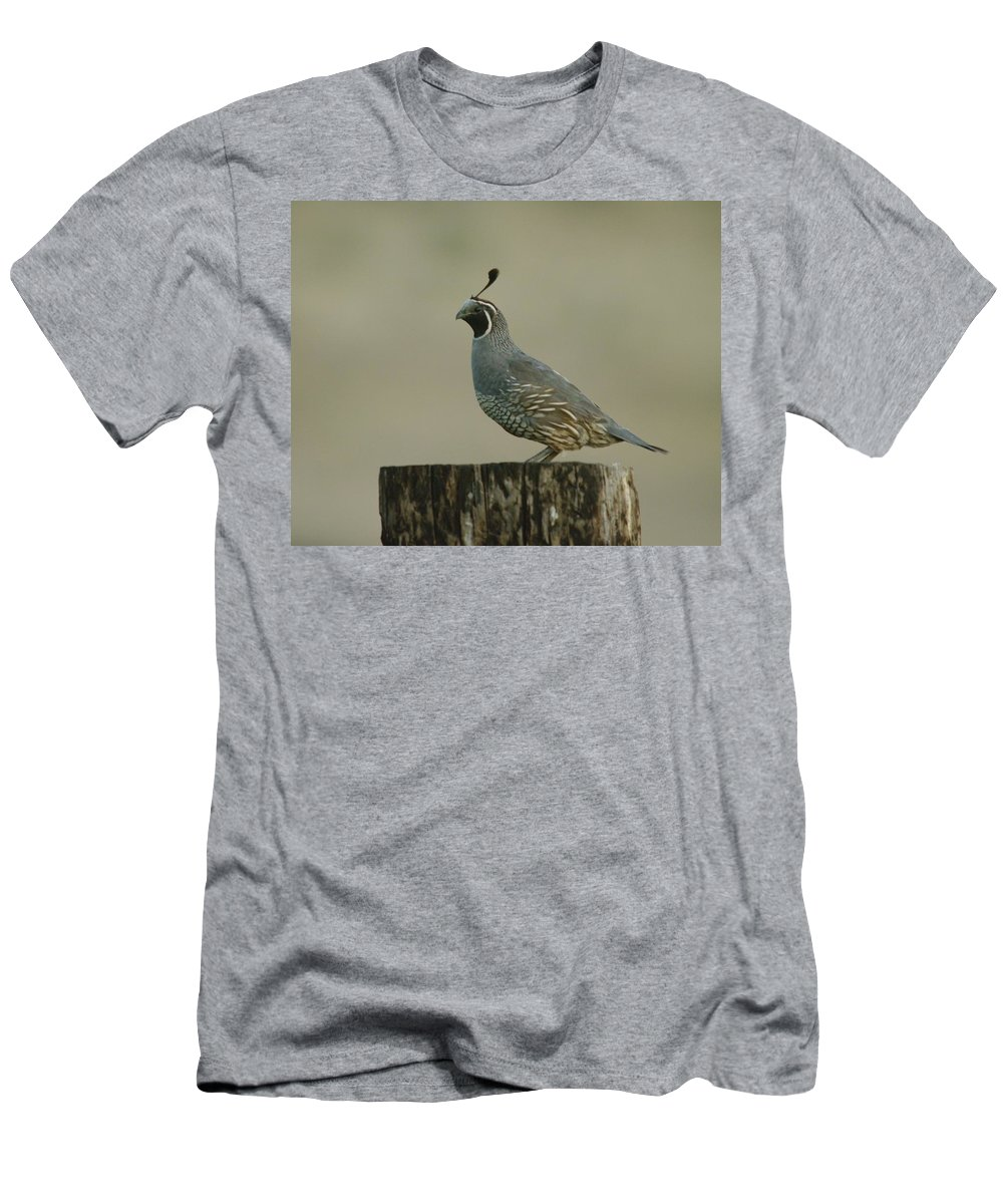 Birds Men's T-Shirt (Athletic Fit) featuring the photograph A Sole Rooster Quail by Jeff Swan