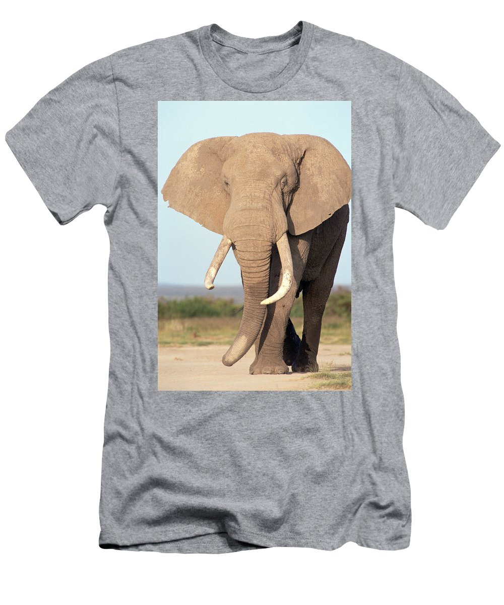 Feb0514 Men's T-Shirt (Athletic Fit) featuring the photograph African Elephant Bull Amboseli by Gerry Ellis