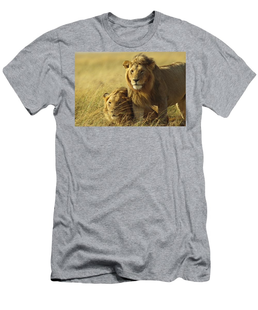 Feb0514 Men's T-Shirt (Athletic Fit) featuring the photograph African Lion Juvenile Males Masai Mara by Gerry Ellis