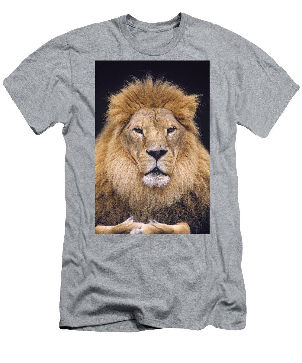 Feb0514 Men's T-Shirt (Athletic Fit) featuring the photograph African Lion Male Portrait by Gerry Ellis