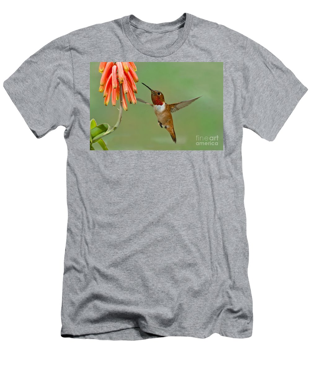 Allen's Hummingbird Men's T-Shirt (Athletic Fit) featuring the photograph Allens Hummingbird At Flowers by Anthony Mercieca