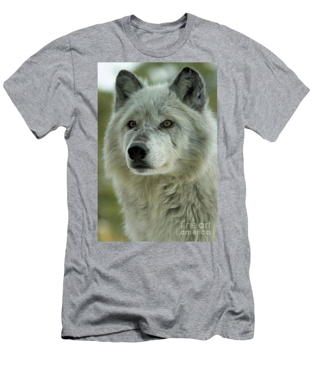 Alpha Wolf Men's T-Shirt (Athletic Fit) featuring the photograph Alpha Curiosity by Adam Jewell