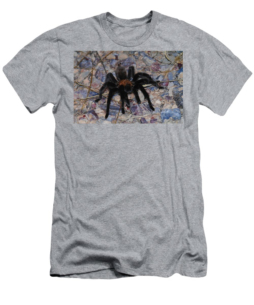 Spiders Men's T-Shirt (Athletic Fit) featuring the photograph And Along Came A Little Spider . by Jeff Swan
