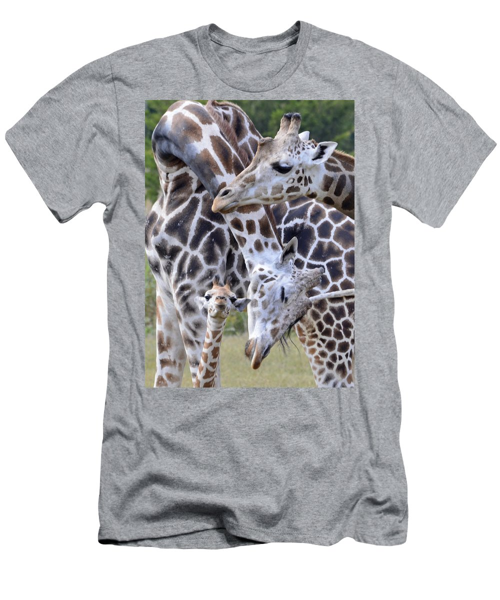 Giraffe Men's T-Shirt (Athletic Fit) featuring the photograph And Baby Makes Three by Lori Tambakis