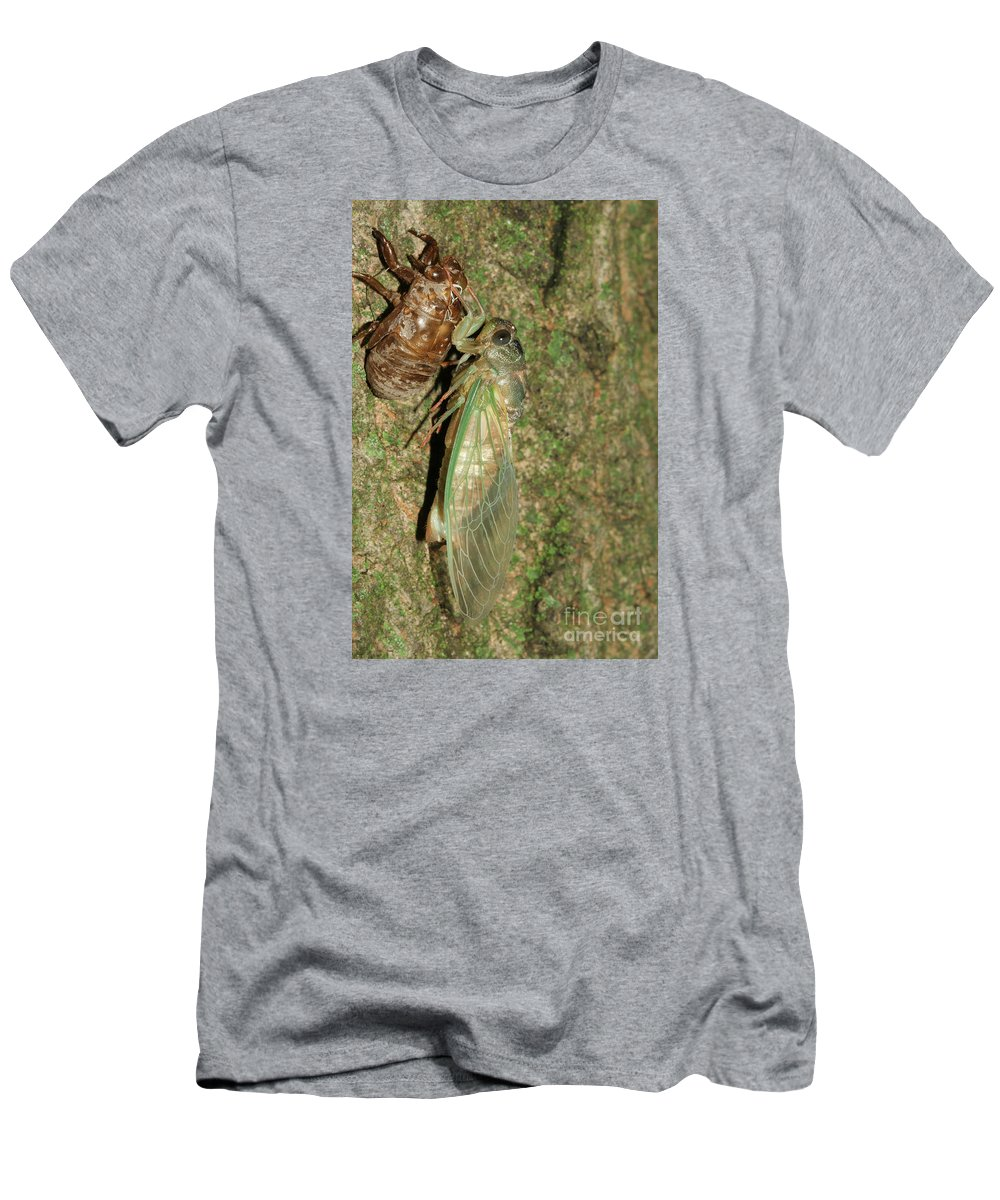 Annual Cicada Men's T-Shirt (Athletic Fit) featuring the photograph Annual Cicada by Judy Whitton