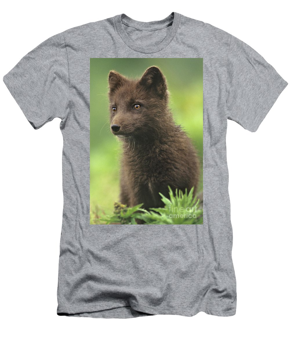 North America Men's T-Shirt (Athletic Fit) featuring the photograph Arctic Fox Portrait Alaska Wildlife by Dave Welling