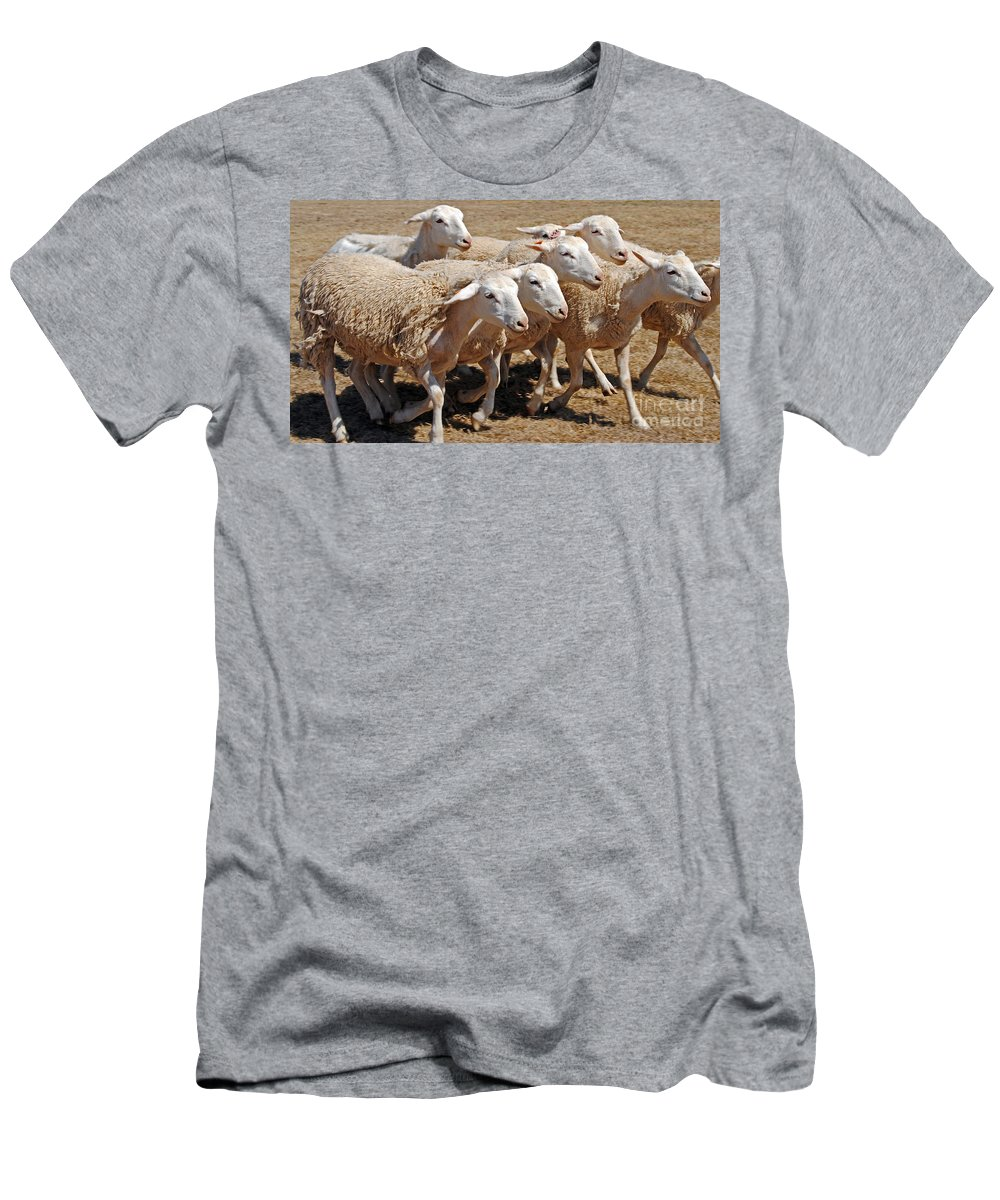 Scenic Tours Men's T-Shirt (Athletic Fit) featuring the photograph Baa Baa by Skip Willits