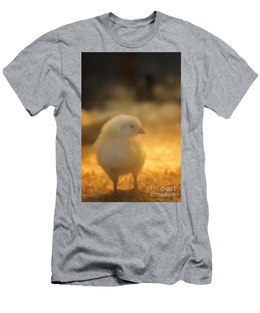 Chick Men's T-Shirt (Athletic Fit) featuring the photograph Baby Chick by Margie Hurwich