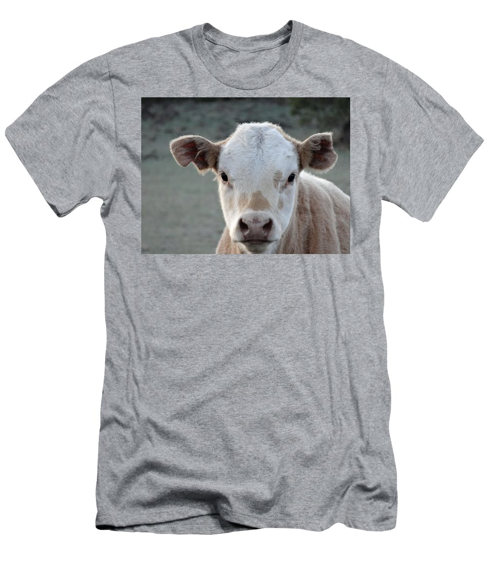 Baby Cow In Colorado Men's T-Shirt (Athletic Fit) featuring the photograph Baby Cow In Colorado by Dan Sproul