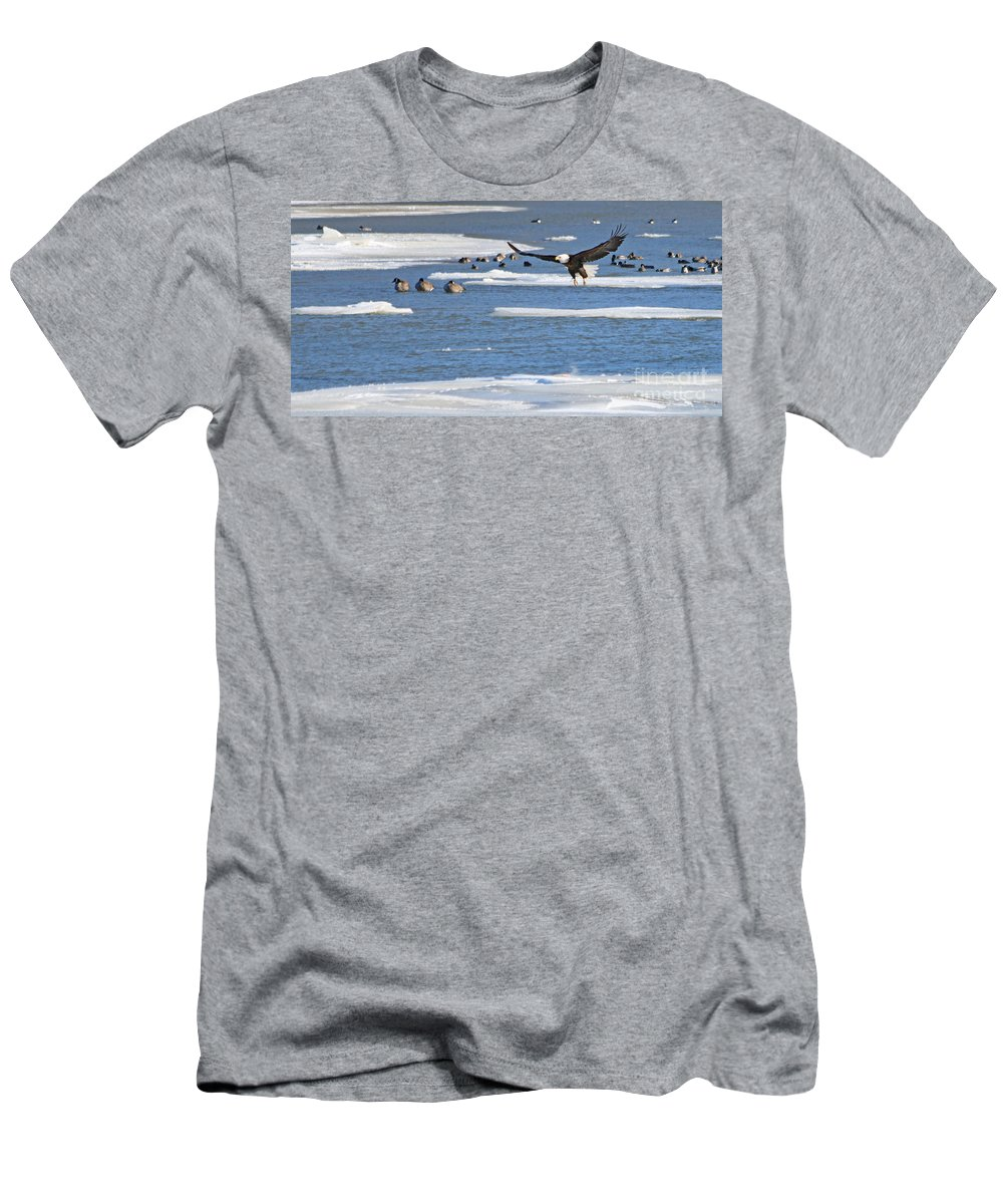 Bald Eagle Men's T-Shirt (Athletic Fit) featuring the photograph Bald Eagle Over Maumee River 2456 by Jack Schultz