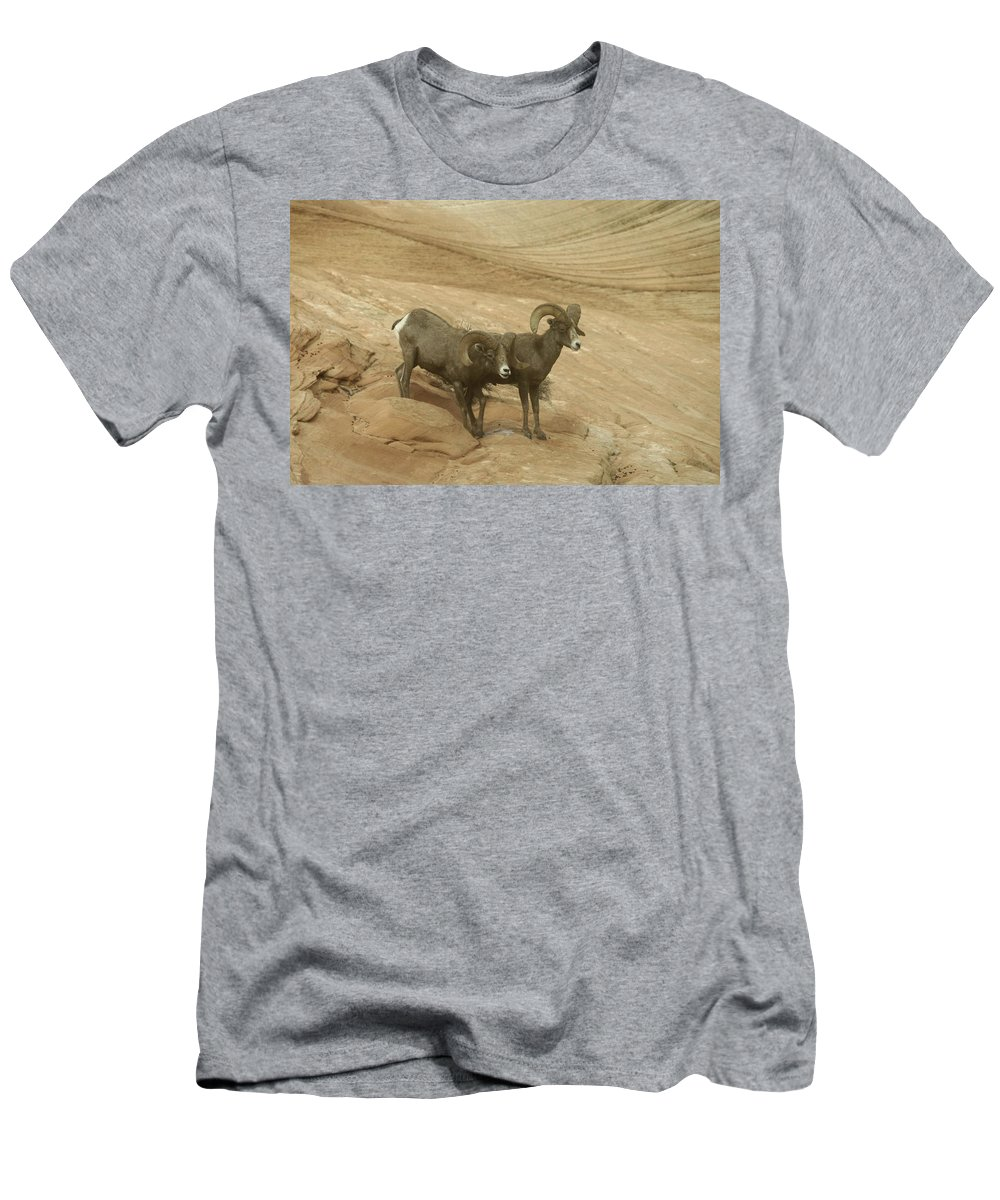 Bighorn Sheep Men's T-Shirt (Athletic Fit) featuring the photograph Big Horn Sheep by Jeff Swan