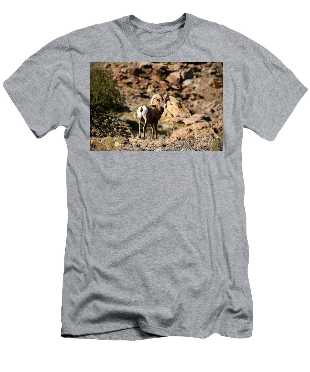 Wildlife Men's T-Shirt (Athletic Fit) featuring the photograph Bighorn Stare by Gary Emilio Cavalieri