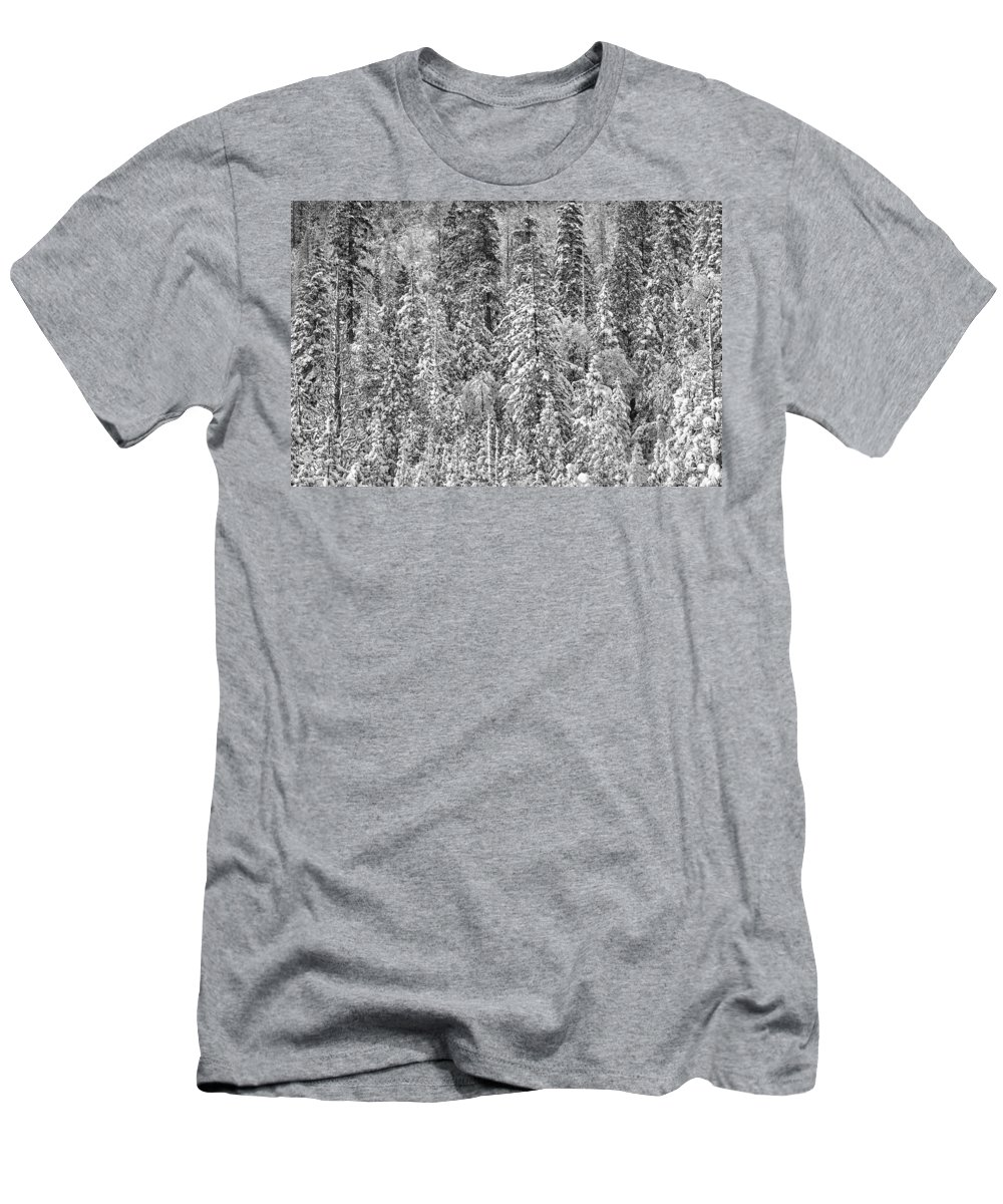 Snow Men's T-Shirt (Athletic Fit) featuring the photograph Black And White Trees In A Forest by Brandon Bourdages