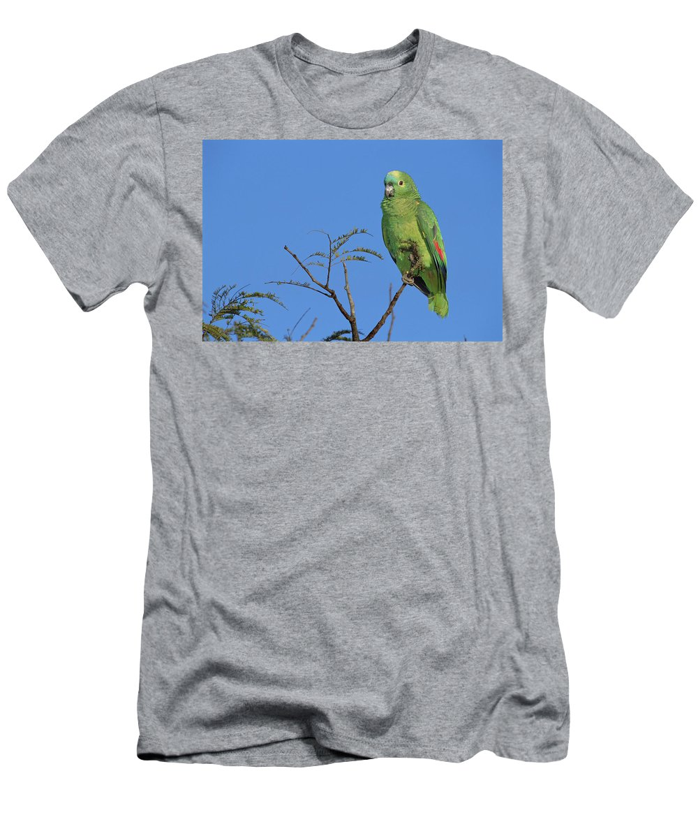 Feb0514 Men's T-Shirt (Athletic Fit) featuring the photograph Blue-fronted Parrot Emas National Park by Tui De Roy