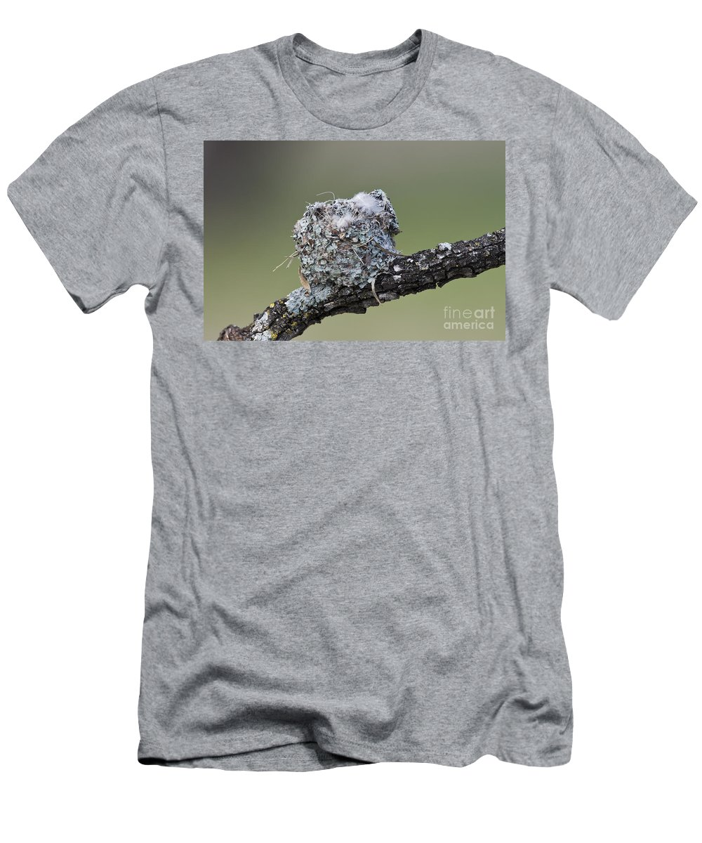 Blue-gray Gnatcatcher Men's T-Shirt (Athletic Fit) featuring the photograph Blue-gray Gnatcatcher Nest by Anthony Mercieca
