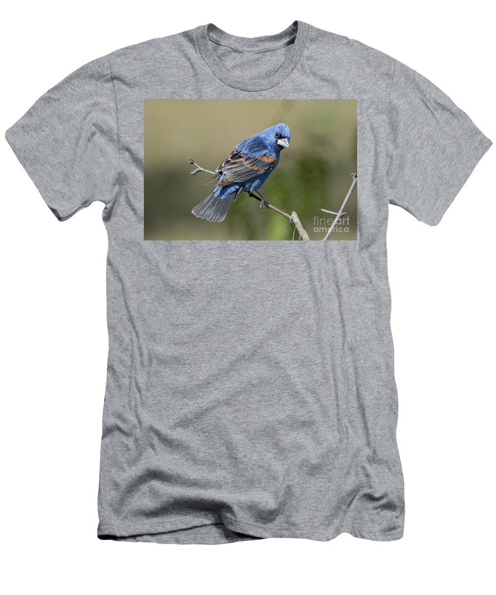 Blue Grosbeak Men's T-Shirt (Athletic Fit) featuring the photograph Blue Grosbeak by Anthony Mercieca