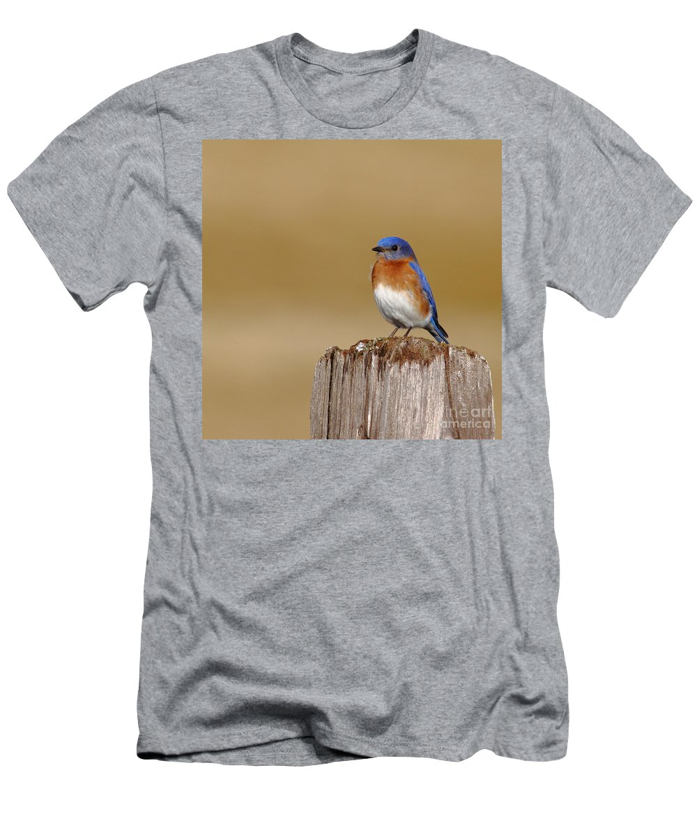 Animal Men's T-Shirt (Athletic Fit) featuring the photograph Bluebird At His Post by Robert Frederick