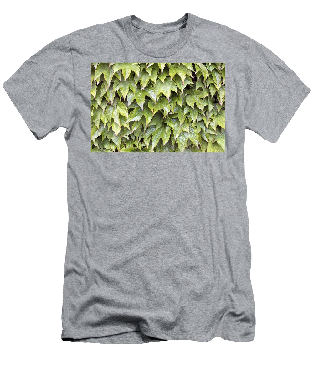 Boston Men's T-Shirt (Athletic Fit) featuring the photograph Boston Ivy Climbing Vines Background by Jit Lim