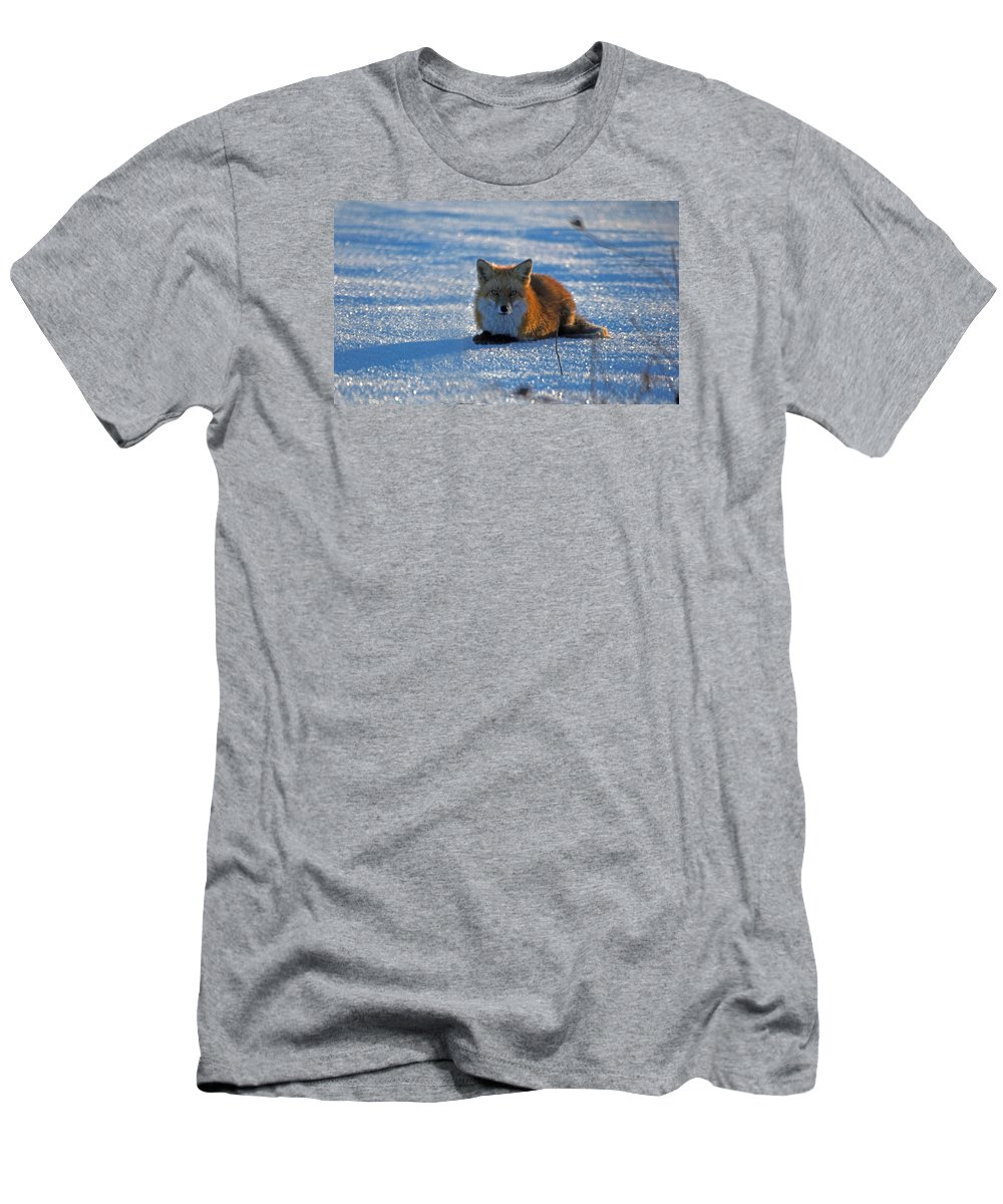 Fox Men's T-Shirt (Athletic Fit) featuring the photograph Brer Fox by Skip Willits